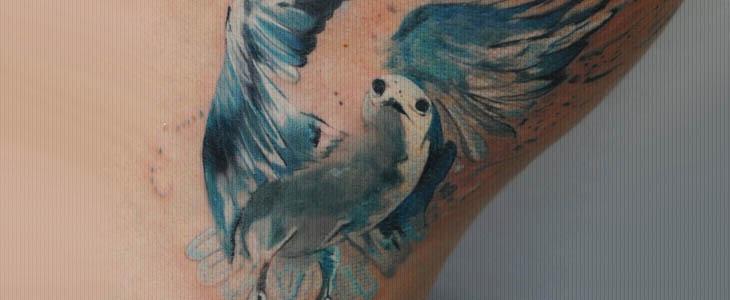 tatuaggio gabbiano